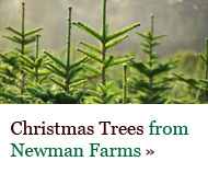 Christmas Trees - click here